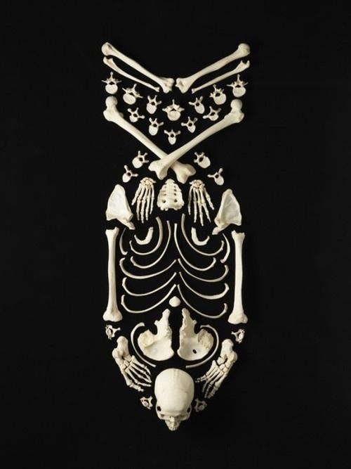 this isn't happiness.™ Peter Nidzgorski, tumblr #skull #bones #bomb #skeleton