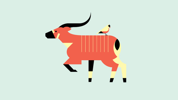 Bongo, by Always With Honor #inspiration #creative #design #graphic #illustration #animal