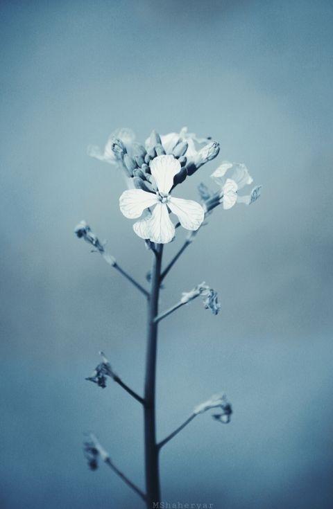 #p;hotography3Photo editor#editorial#flower#beautiful