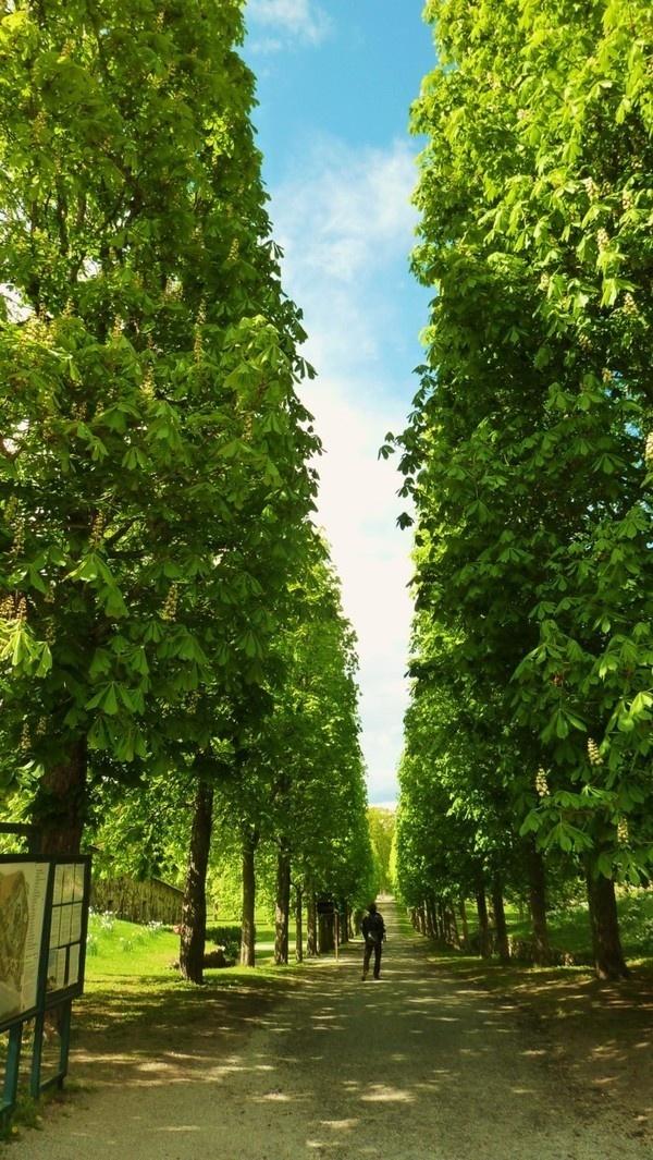Stock Home 2011 on Behance #sweden #wallb #sky #stockholm #trees