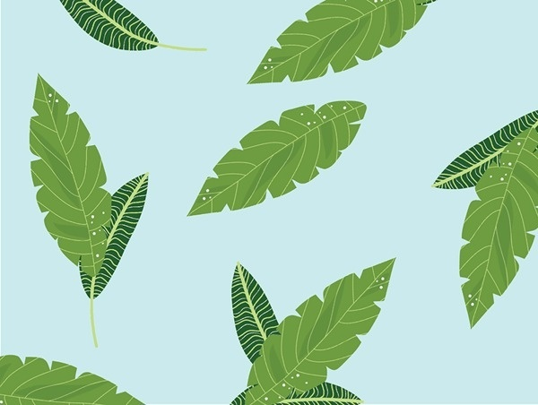 Leaves - This happens all the time. #pattern #plants #design #illustration #nature #leaves #foliage #green