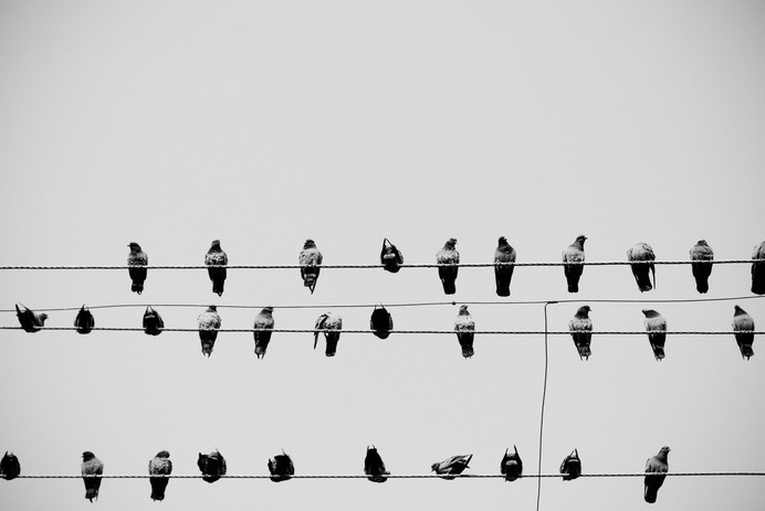 IG145 #birds #on #wire #group