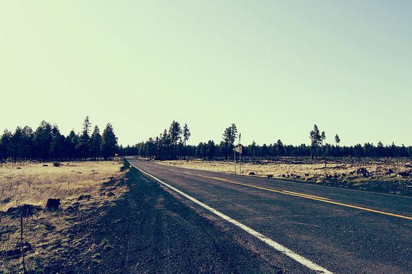 American Road Trip #sky #woods #road #long #trip #america #open #green