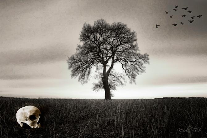 Autumn skull #tree #autumn #manipulation #skull #dark