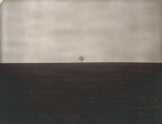 Alone, photography by Dan Isaac Wallin. Polaroid. In Nature, Vegetal, Tree, forest. Alone, photography by Dan Isaac Wallin. Image #411325