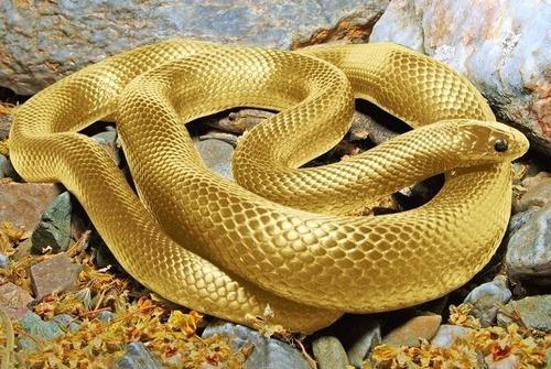 Jpeg Heaven #bling #bite #snake