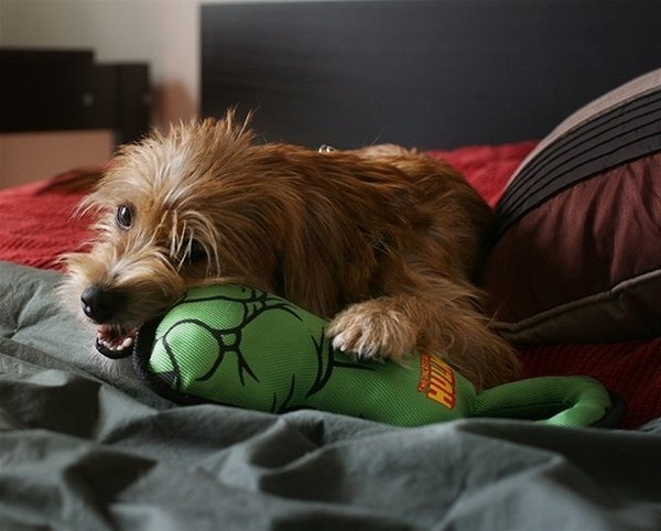 Hulk Fist Pull Toy For Dogs #toy