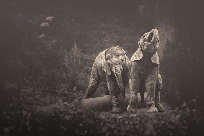 africa-souls-zoo-photography-manuela-kulpa-11 #photography #animals