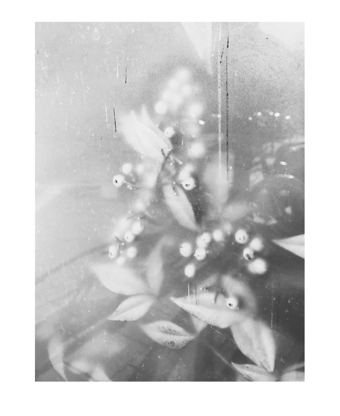 #window #urban #plants PHOTOGRAPHIE © [ catrin mackowski ]