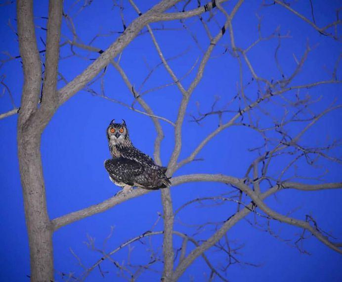 #kings_birds: Fine Art Birds Photography by Saurabh Desai