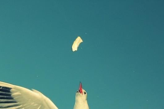 websitesarelovely #photography #retro #snapshot #seagull