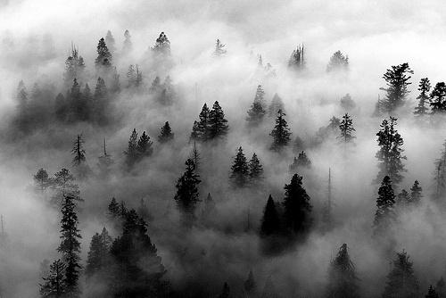 SOLITUDE #trees