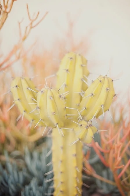 http://palmbreezy.tumblr.com/ #airy #yellow #desert #cactus