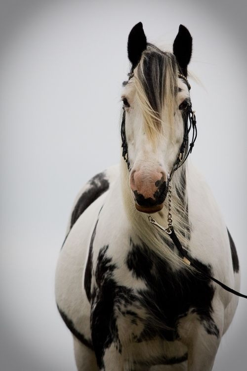 Beautiful Beautiful horse Love Moments #horse #photography #animal #beauty