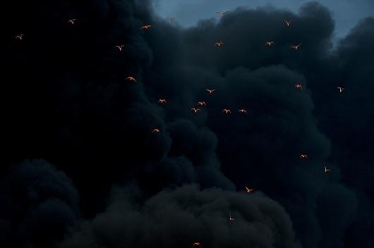 1_tumblrlekea2wfvb1qzr7ibo11280.jpg (960×639) #birds #photography #smoke