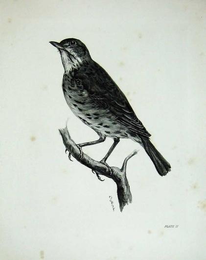 E1291906374.jpg (796×1000) #bird