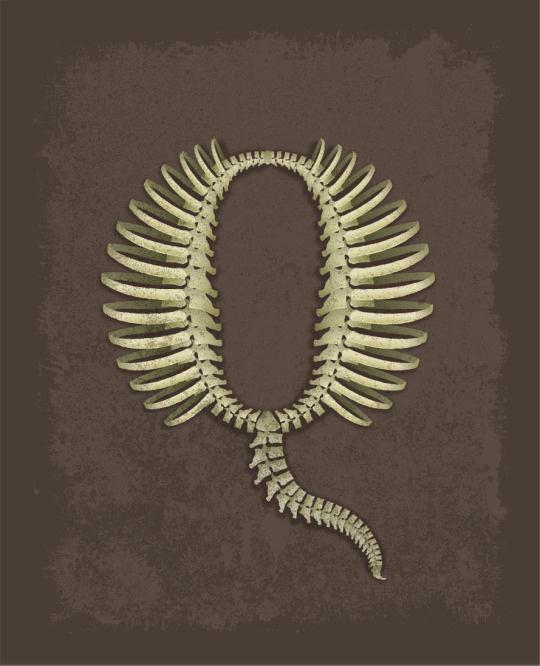 personal, illustration, letters, Q, bones, fossil