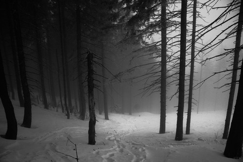 SOLITUDE #trees #winter
