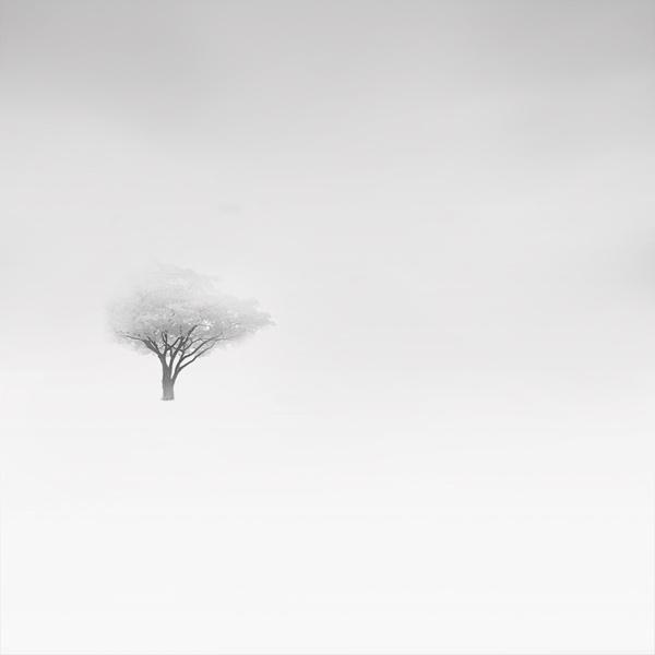 Amazing Winter Foggy Photos by Vassilis Tangoulis #foggy #forest #snow #winter