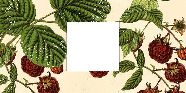 Whoa Nelly Catering Branding & Website on Behance #banner #header #brand #illustration #logo