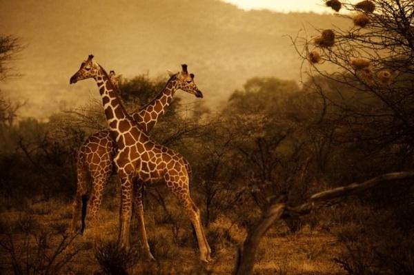 Kenya by Diego Arroyo #inspiration #photography #travel