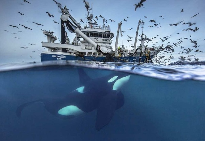 Audun Rikardsen Captures Magnificent Whales on The Arctic Side of The World