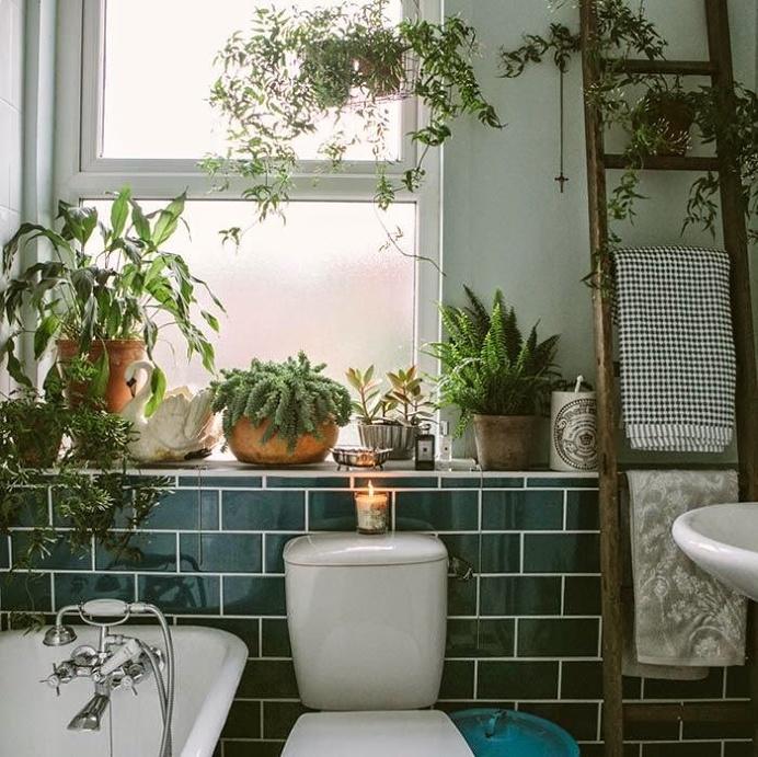 #bathroom #plants #vegetation
