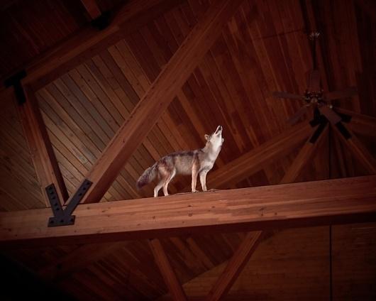 Jon Horvath   iGNANT #wild #home #wood #art #wolf