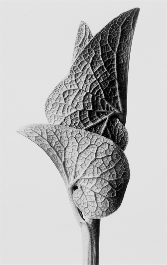 but does it float #beauty #biology #leaf #photo #structure #flower #organic #plant