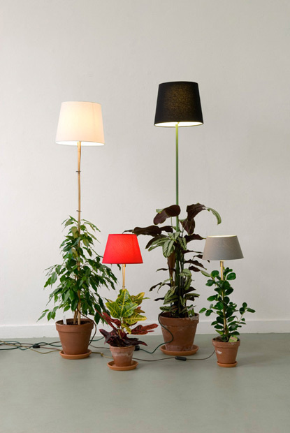 plant lamp 01 #photography #light #plant