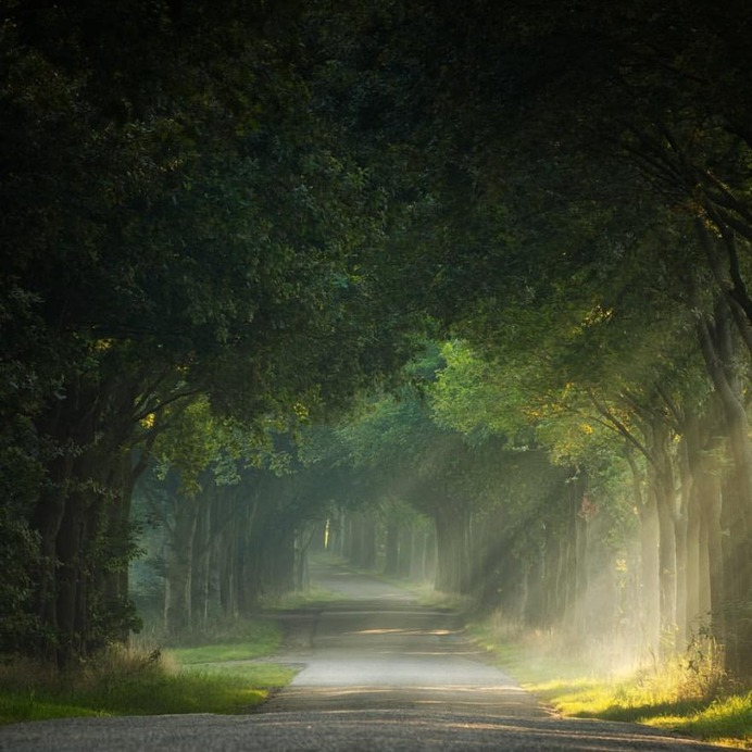 Absolutely Magical and Beautiful Forest Photography by Martin Podt