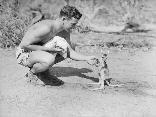 All sizes | An American soldier with a joey, 1942 | Flickr - Photo Sharing! #ww2 #war #world #soldier #two #kangaroo #memorial #joey #australian #historic