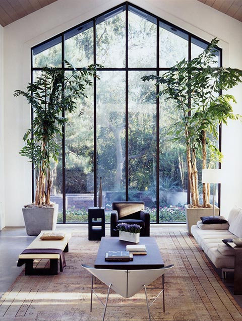 I like the trees #home