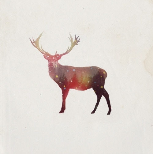 RichieSwims #photo #deer #nature #illustration