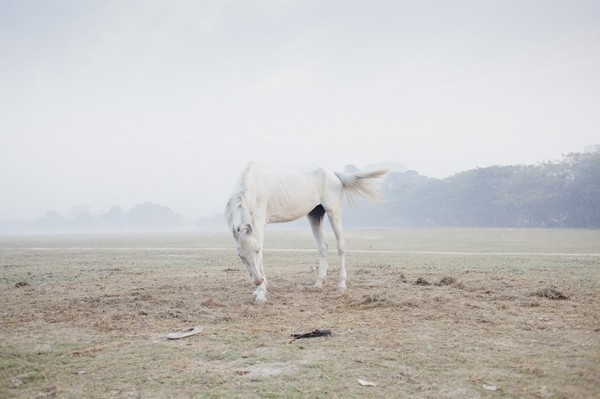Sarker Protick — Some Place Else #photography #horse