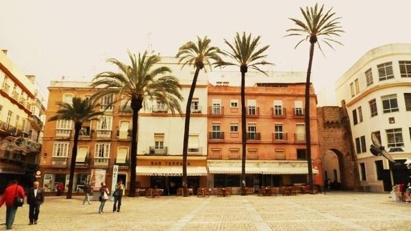 Cadizzle 2011 on Behance #palm #spain #wallb #row #cadiz #trees