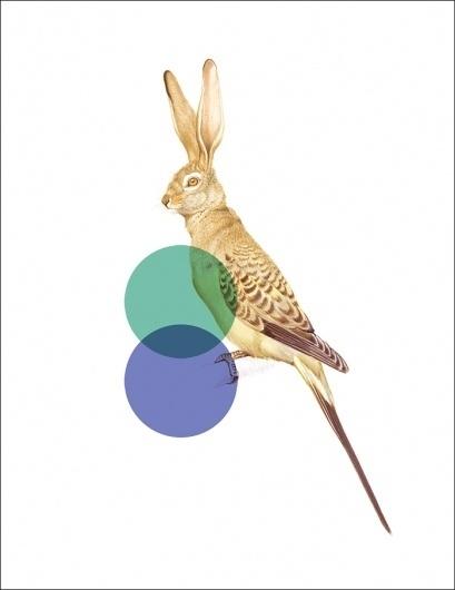 Odd Animals : - tor weeks - director of art #inspiration #design #animals