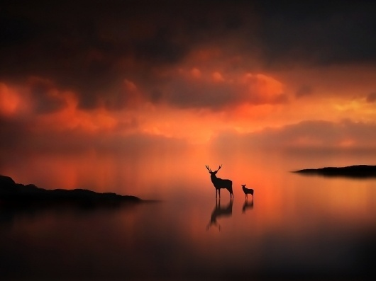 500px / Photo #clouds #deer #fog #water #weather #animals #sunset