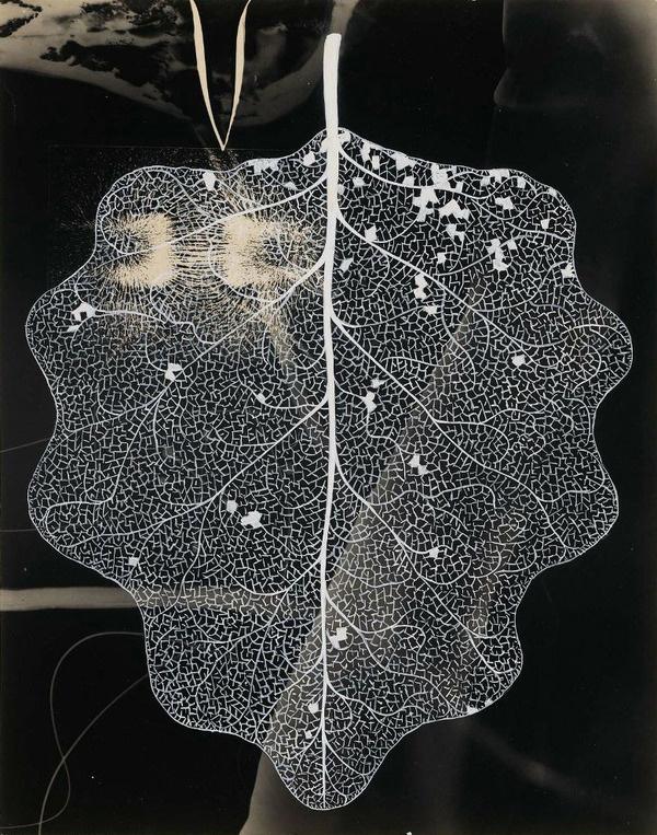 but does it float #flourish #lines #lifework #leaf #nature #organic #detail