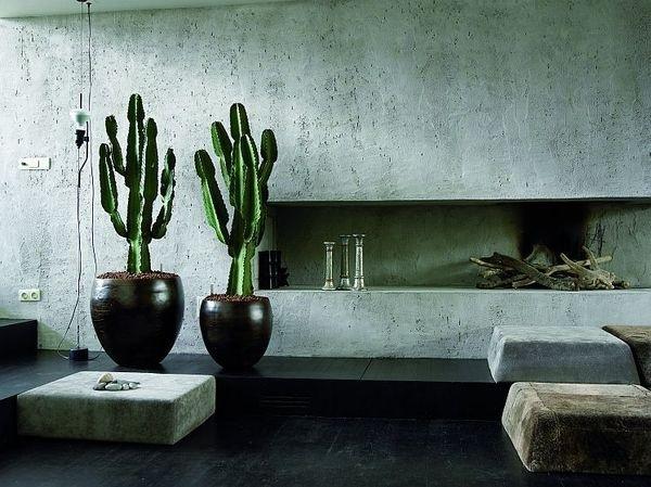 cactus interior design easy to care for cactus cactus living room #interior #cactus #plant