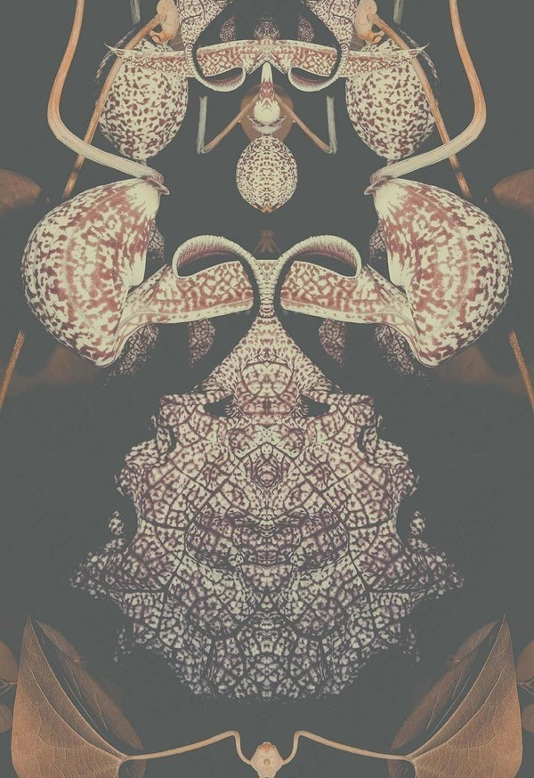 Altered Flora I #limited #edition #flora #print #poster #orchid #plant