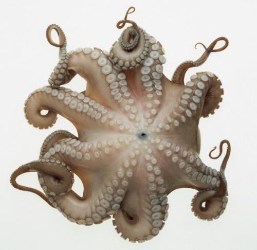 W E L L ※ F E D #octopus