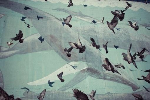 Google Reader (1000+) #birds #pigeons #whales