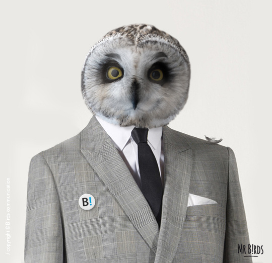 """""""Mr B!rds for president"""" Birds communication agency (Toulouse FRANCE)link #owl #photo #head #bird #formal #manipulation #collage #suit"""