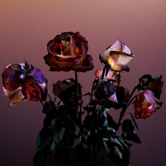 #rose #flowers #photography #composite #poster #floral