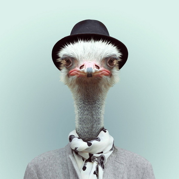 Animals Portraits by Yago Partal   Cuded #portraits #partal #yago #animals