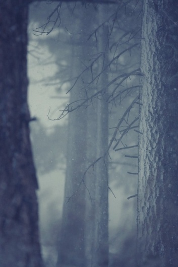 Snow in forest | Flickr - Photo Sharing! #forest #snow #coreyholms