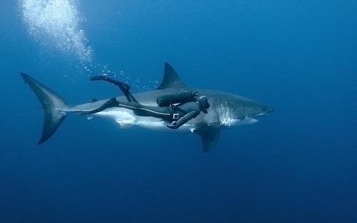 DeadFix » Sahrk #free #diving #shark