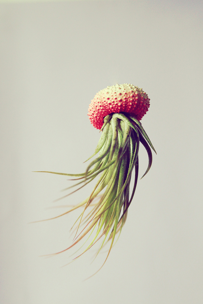 this isn't happiness™ (Out of the water, Cathy Van Hoang), Peteski #design #floating #photography #nature #art #flower #plant