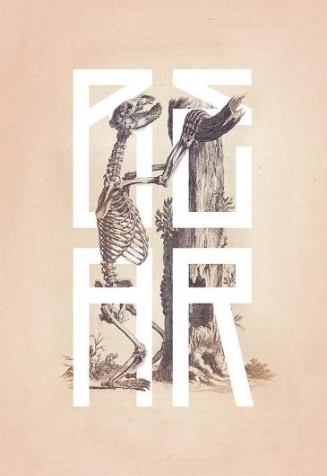 Bone - Anatomy Illustrated on the Behance Network #skeleton #bone #anatomy #book #kelava #josip #poster #bear